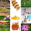 Beekeeping — Stock Photo #5798817