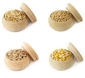 Oat, Wheat, Barley, Corn — Stock Photo