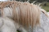 Horse Mane — Stock Photo
