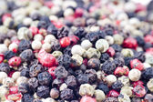 Color peppercorns close up — Stock Photo