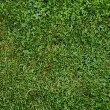 Lush Green Grass — Stock Photo #6587472