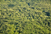 Aerial view of a green forest — Stock Photo