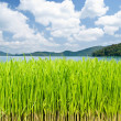 Stock Photo: Grassland in front of lake and mountains