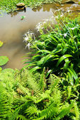 Little pond with ferns and flowers — Stock Photo