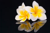 Leelawadee flower and its reflecio — Foto Stock