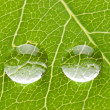 Two transparent drops on green leaf — Stock Photo #6408804