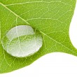 Green leaf with transparent water drop — Stock Photo #6408865