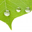 Green leaf with transparent water drop — Stock Photo #6477736