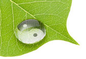 Yin yang symbol on water drop — Stock Photo