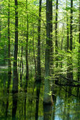 Swamp in the forest — Stock Photo