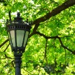 Stock Photo: Retro lamp under the tree