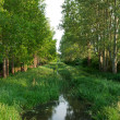 Stock Photo: Creek between two avenues near Szigliget at Lake Balaton,Hungary