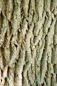 Texrure кора дуба дерево в лучах солнца — Стоковое фото