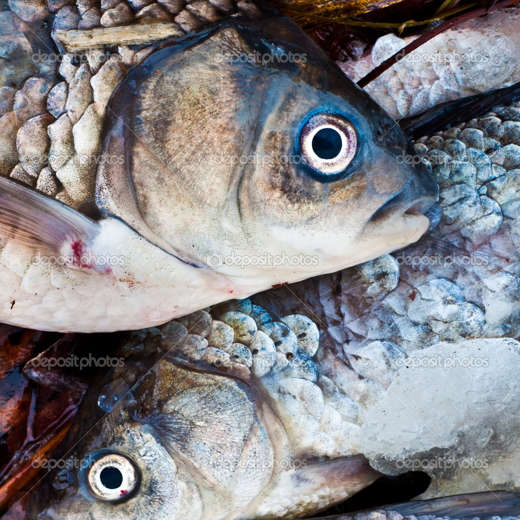 Fresh raw fish presented for sale stock photo lucicn for Stock fish for sale
