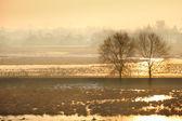 árboles solitarios en un campo — Foto de Stock