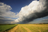 Field with dramatic sky — Stock Photo