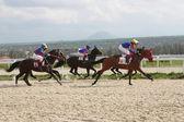 Horse racing. — Stockfoto