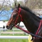 Portrait of horse. — Stock Photo