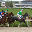 Horse racing. — Stock fotografie
