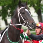 Beautiful horse. — Stock Photo #5709521