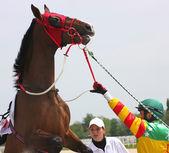 Freche Pferd. — Stockfoto