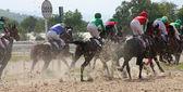 Paardenrace. — Stockfoto
