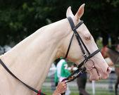 Golden horse of Turkmenistan. — Stock Photo