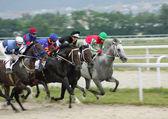 Les courses de chevaux. — Photo