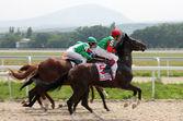 Horse racing. — Stock Photo
