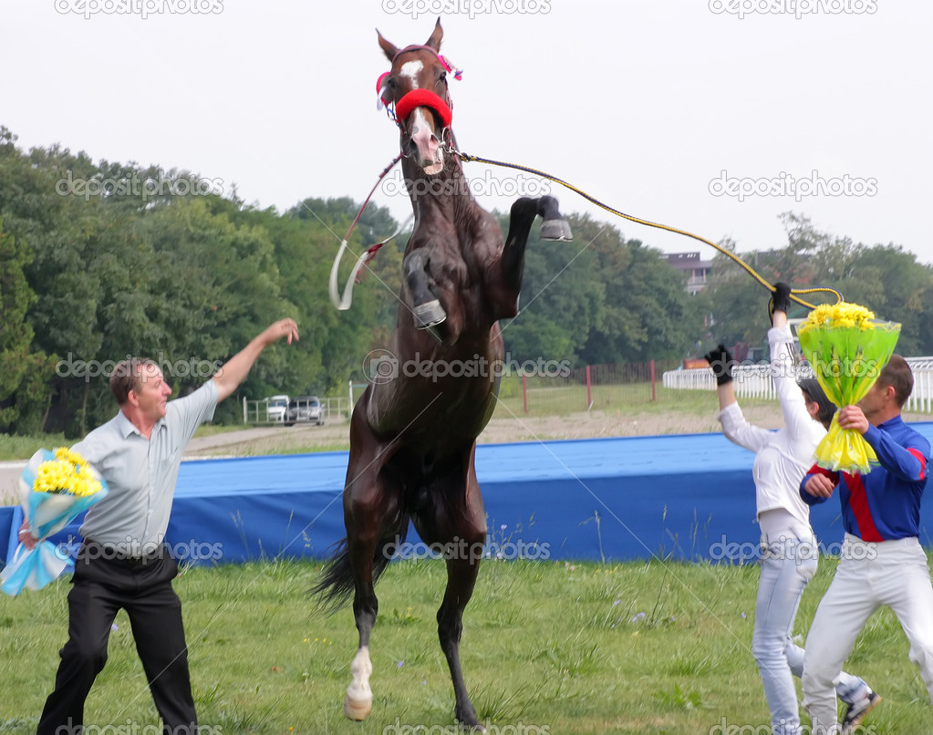 The akhal-teke horse, black stallion Patron after race for the prize of Melekusha on September 4,2011 in  Photo #6685092
