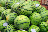 Green watermelons on market stand — Stock Photo