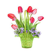 Bouquet of red tulips in a green basket isolated on a white back — Stock Photo