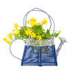 Watering with a bouquet of buttercups — Stock Photo
