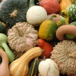 Stock Photo: Pumpkins and gourds