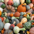 Pumpkins and gourds — Stock Photo #5603348