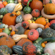Pumpkins and gourds — Stock Photo #5723135