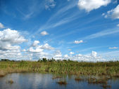Everglages Florida — Stock Photo