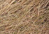 Suché trávy — Stock fotografie