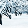 Winter landscape toned blue — Stock Photo