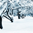 Stock Photo: Winter landscape toned blue