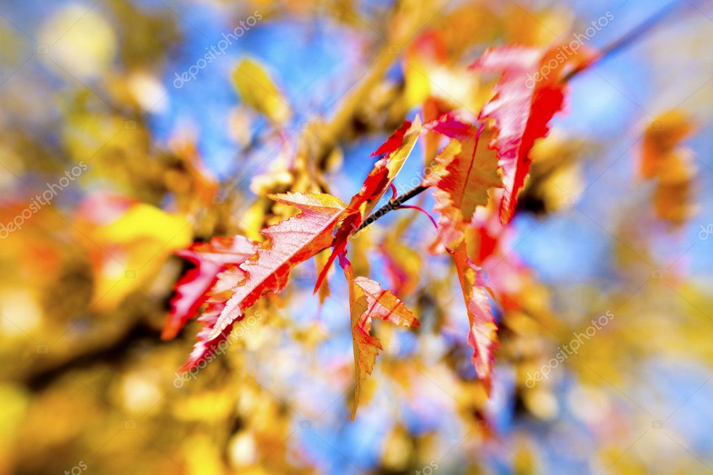 Colorful autumn leaves background. Picture made with special lens — Stock Photo #6655769