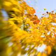 ストック写真: Autumn maple leaves background