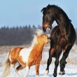 Pony and horse in the winter — Stock Photo