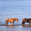 Royalty-Free Stock Photo: Horses in water of lake