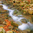 Autumn mountain rivulet — Stock Photo