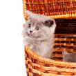 Kittens — Stock Photo #6437162