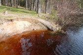 Peat lake of Karelian isthmus — Stock Photo
