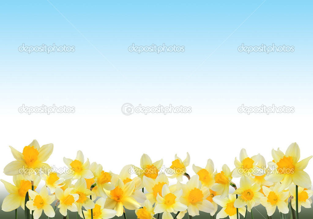 Beautiful frame with growing yellow narcissuses close up — Stock Photo #6674393