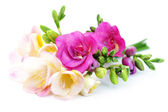 Freesia flowers — Stock Photo