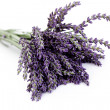 Lavender flowers — Stock Photo #5982756